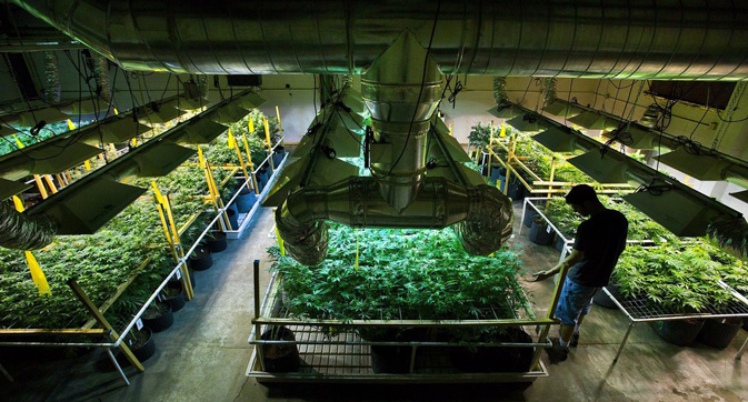 energy efficiency in cannabis growing